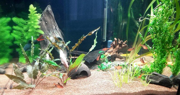 Aquarium Mai 2017 (9)