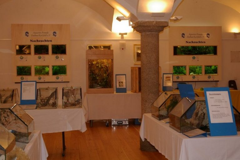 Ausstellung43