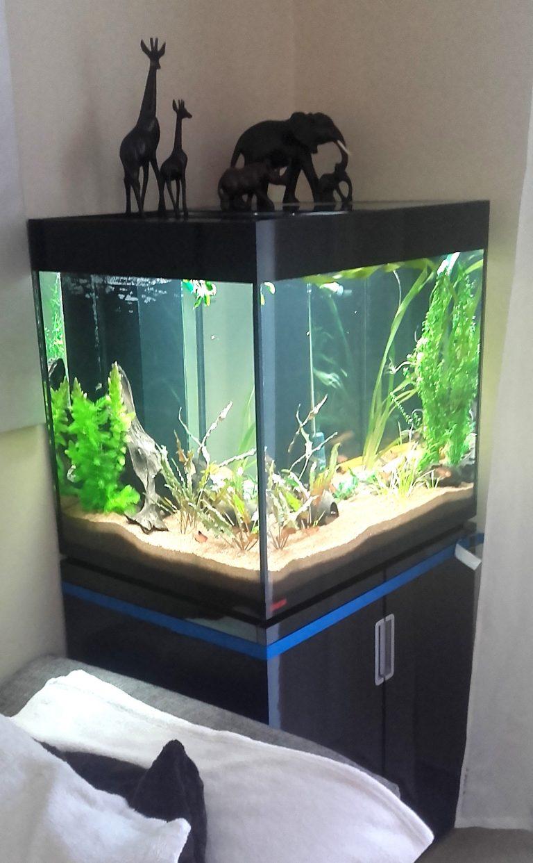 Aquarium Mai 2017 (6)