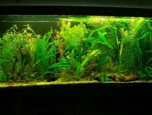 Aquarium_weig