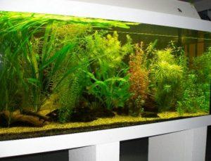 Aquarium_weig2