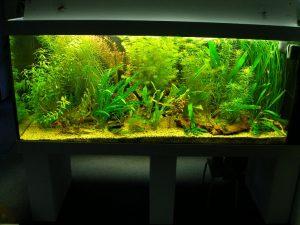 Aquarium_weig3