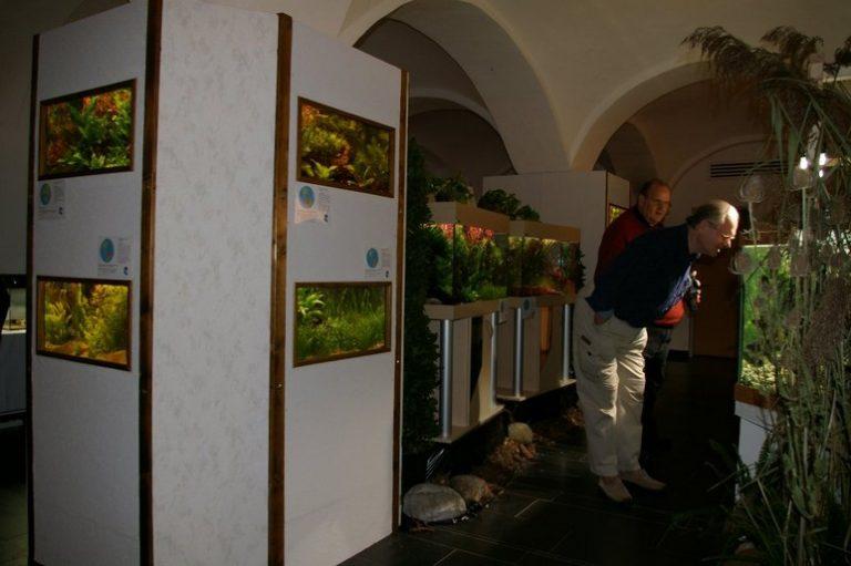 Ausstellung31