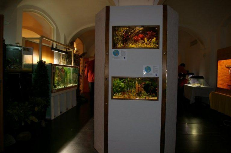 Ausstellung32