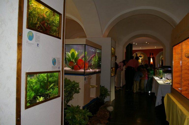 Ausstellung33