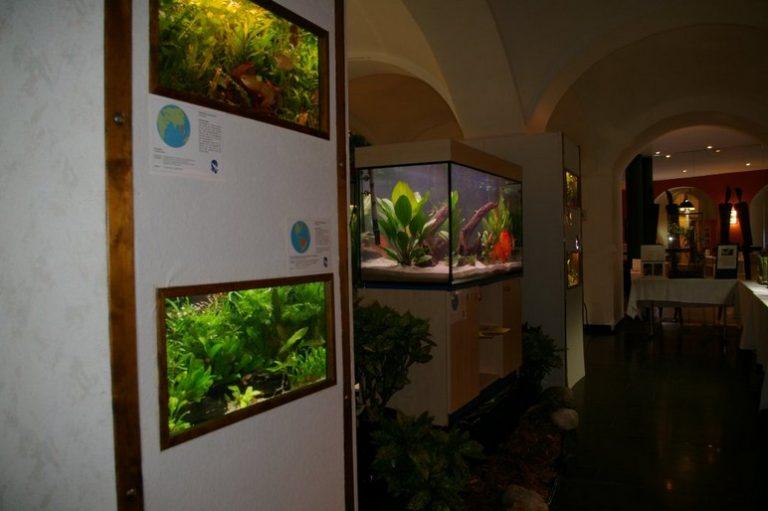 Ausstellung35