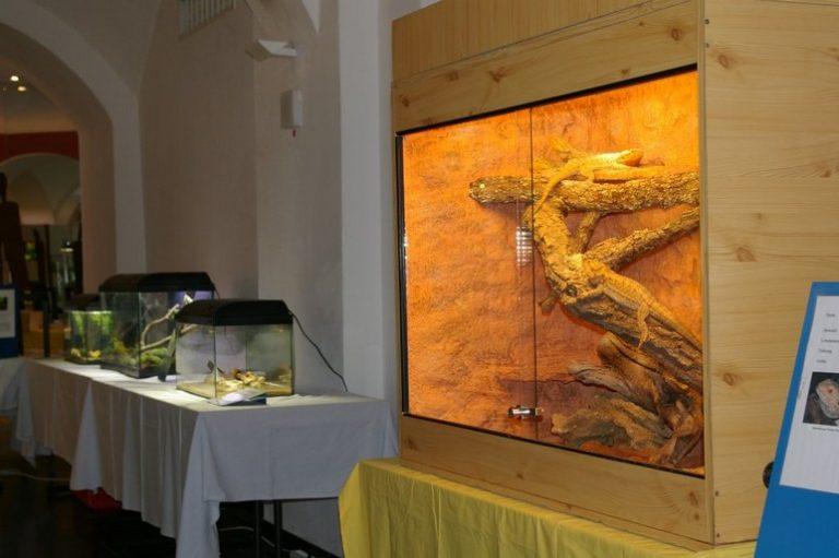 Ausstellung36